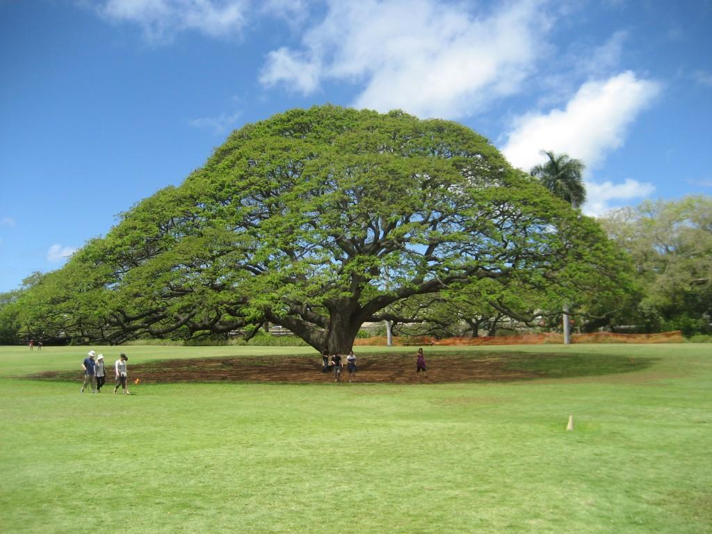 ハワイ,この木なんの木,日立