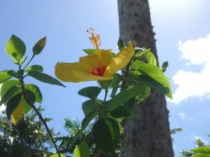 ハワイ,花