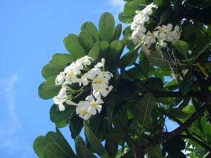 花,ハワイ,ワイキキ